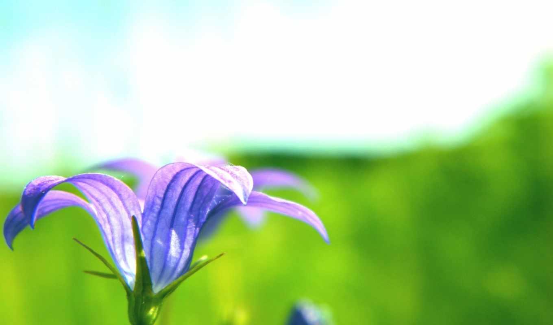 цветок, лето,синий,зелень,скачать