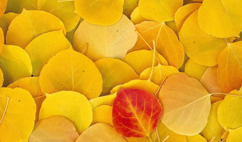 ,листья, желтые, опавшие, osen, осень,