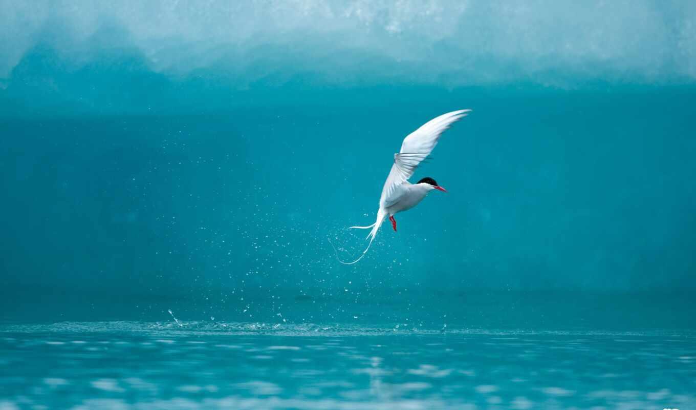 чайка, voda, всплеск, водой, летит,