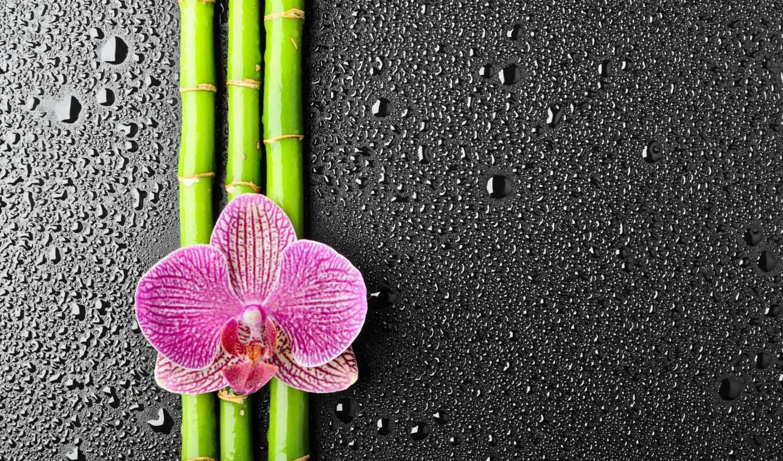 орхидеи, цветы, широкоформатные, взгляд, пост, подборка, ежедневная,