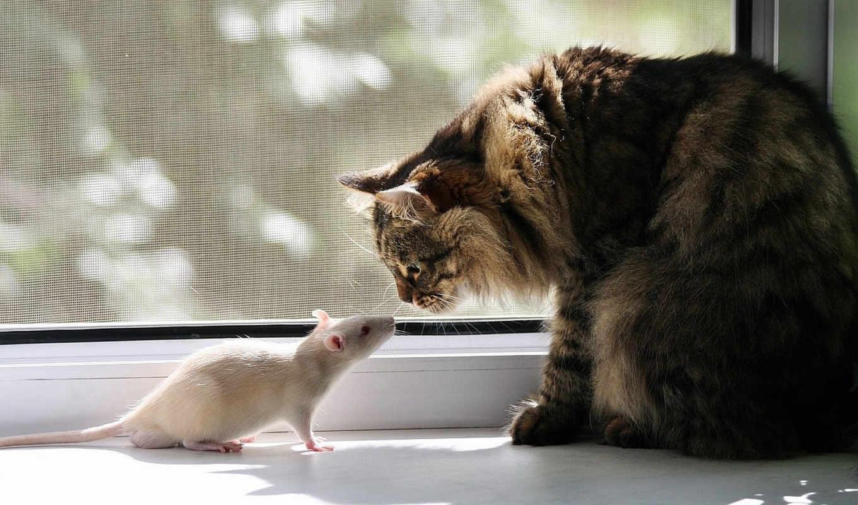 кот, mouse, video, кб, cats, кошки,