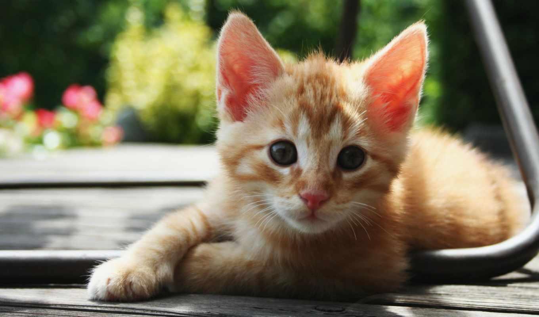 лента, котят, дуте, дутеф, дутефюкг, котята,