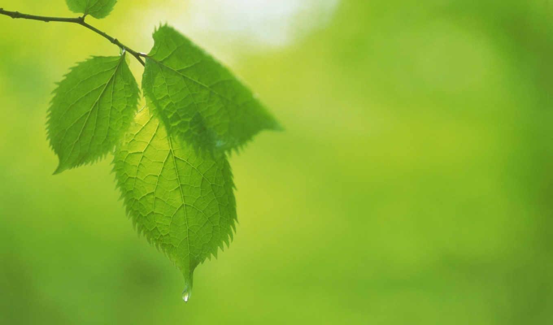 green, leaves, категория, seen, макро, bild, blätter, have,