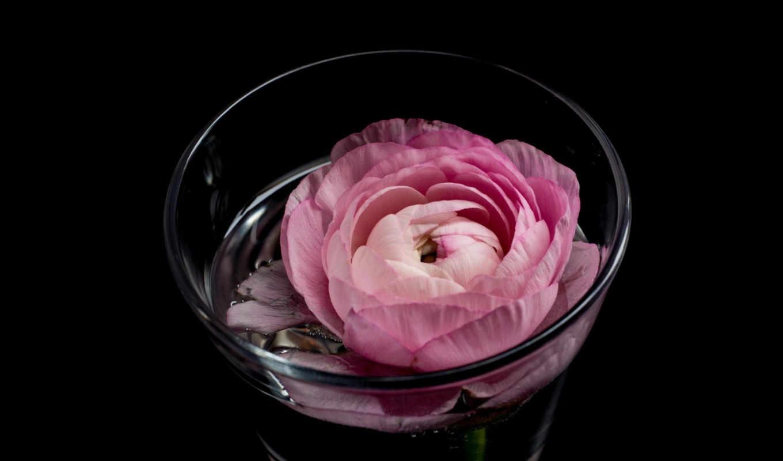 buttercup, you, resolution, цветы, desktop,