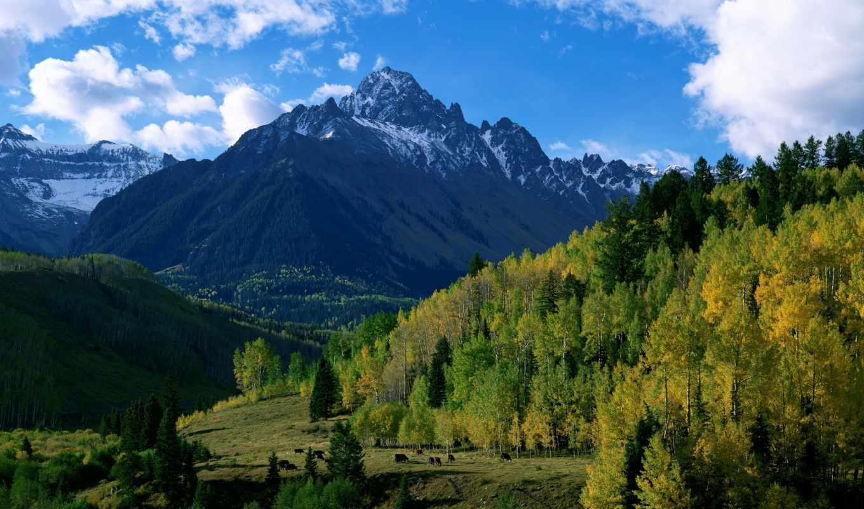 лес, москва, trees, горы, скучать, contact, осень, картинка, природа, холмы,