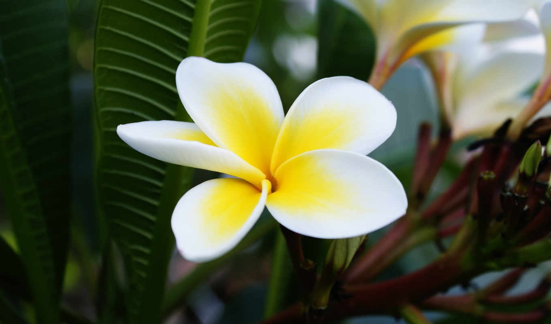 цветок, лепестки, mesmeric, çiçek, картинка,