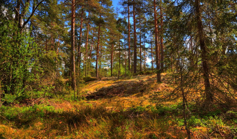 деревья, лето, природа, леса, лес, трава,