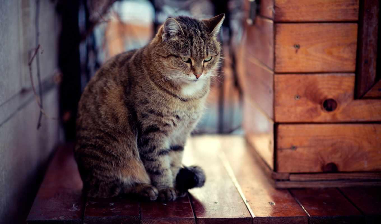 кот, доски,