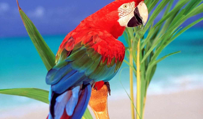 попугаи, красивые, попугай, птицы, zhivotnye, ara, телефоны, попугаев,