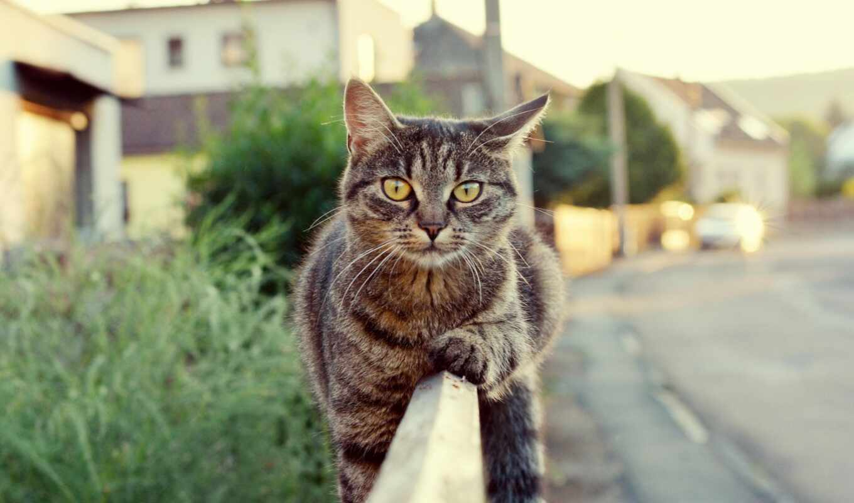 кот, котенок, трава, поведение, их, black, дерево