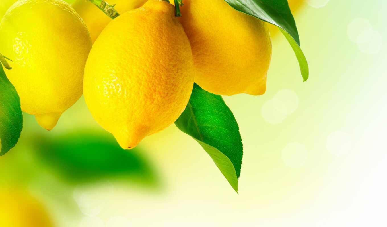 lemon, весна, vsetop, цитрус, москва