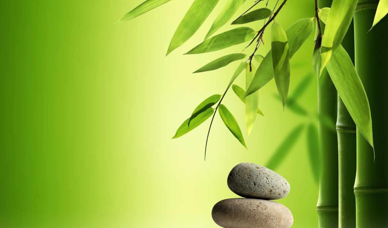 бамбук,