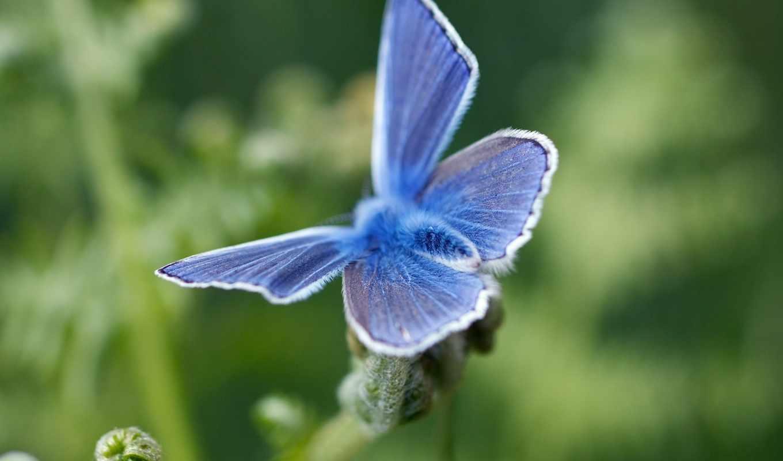 красивые, blue, бабочка, мира, high, сайте, definition, widescreen, бабочка, нашем, makro,