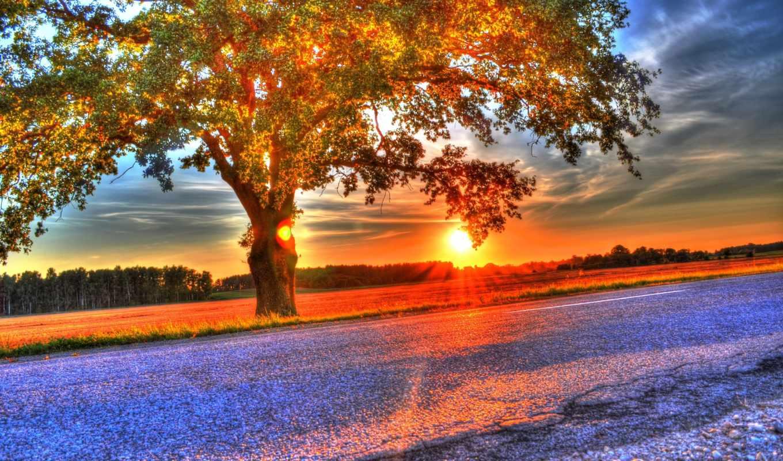 дерево, поле, закат, природа, you, landscape, fone, небо,