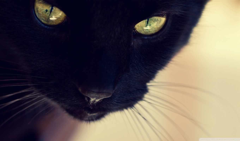 black, кот, vibe, contact, найти, register,