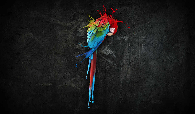 попугай, краски, colorful, анимированные, android,