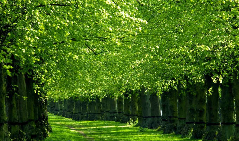 las, hojas, rboles, los, con, por, verdes, asociación, que, color, verde,