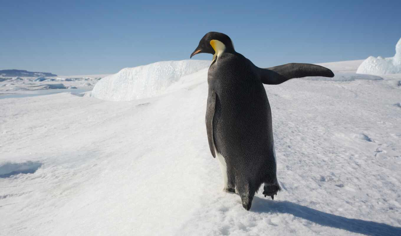 окно, пингвин, microsoft, фото, iceberg, logo, professional