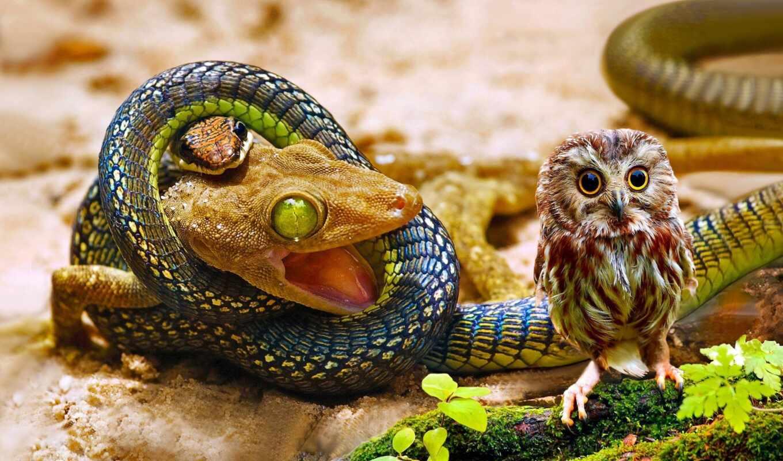 snake, ящер, сова, funart, onlainzmei