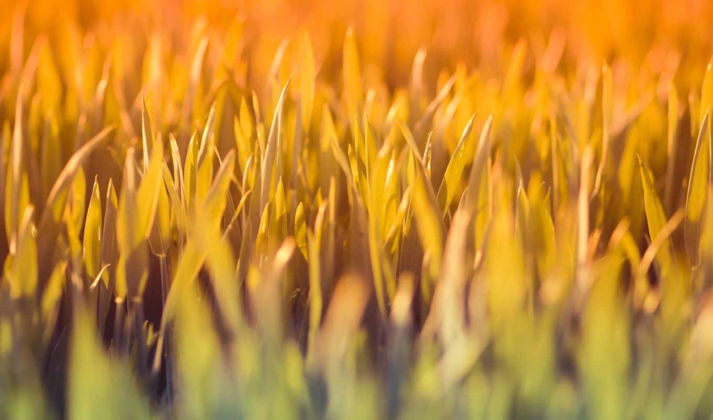 nature, grass, macro, depth, field,