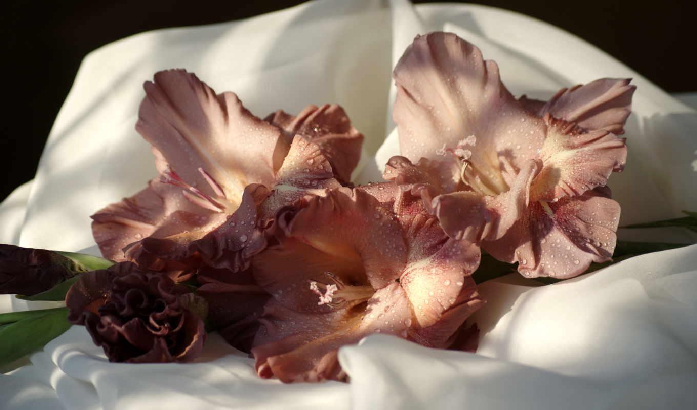 гладиолусы, ipad, цветы, обоях, красивые,