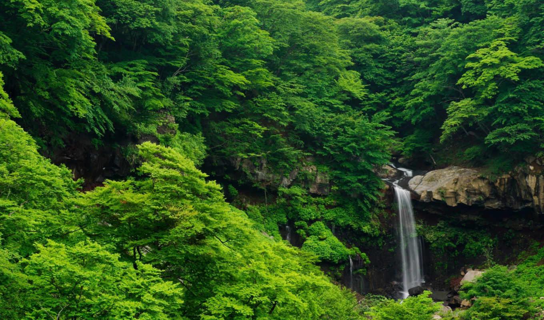лес, bush, gdefon, деревья,