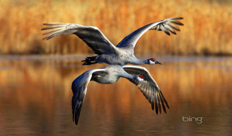 ,птицы, журавли, полет, озеро,