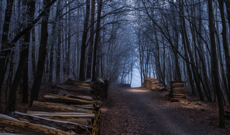 осень, дорога, деревя, разделе, туман, landscape,