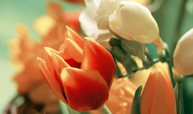 букет, тюльпан, лепестки, тюльпанов, flowers, tulips, wallpaper, цветов, цветы, and,