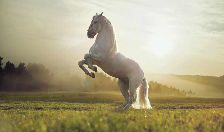 ,лошадь,скакун,белый, туман,