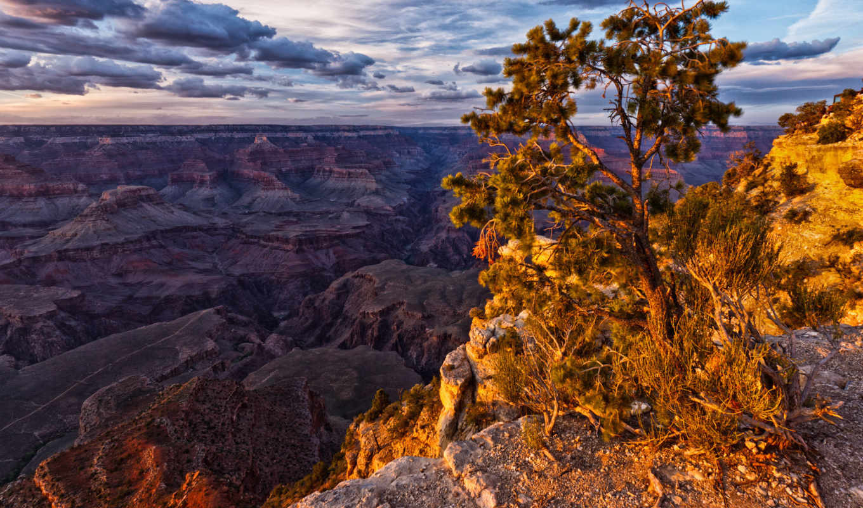 breathtaking, free, природа, дерево, best, взгляд, desktop,
