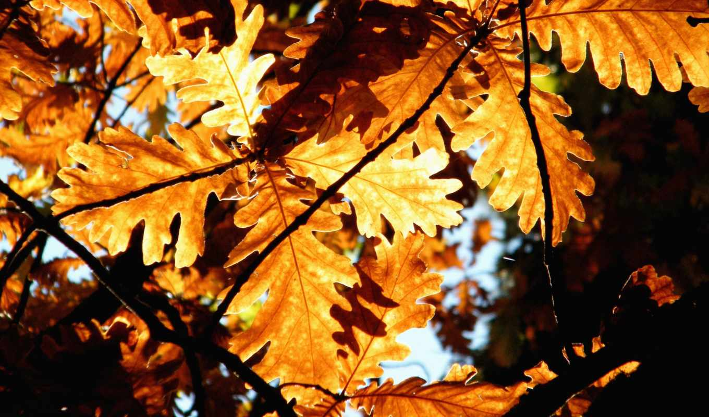 осенние, пейзажи -, листва, природа, макро, high, дерево, definition, осень,