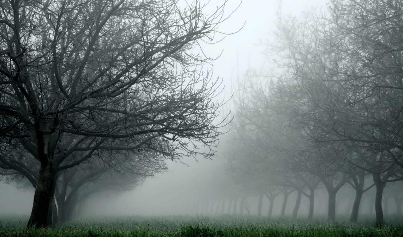 природа, деревья, трава, туман,