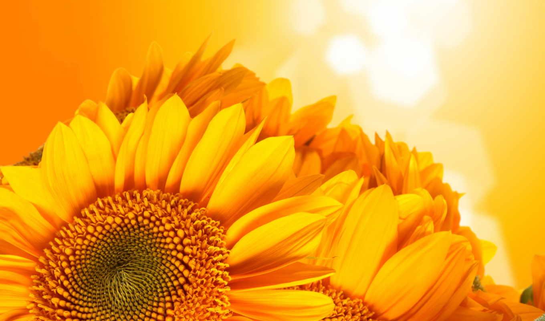 подсолнухи, sun, summer, поле, небо, природа, облака,