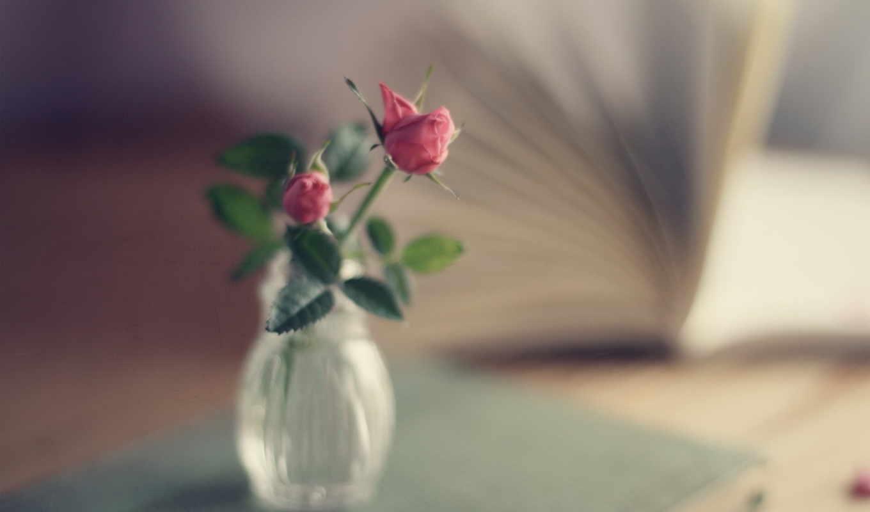 букет, розы, розовые, книга, ваза, focus, цветы, картинка,