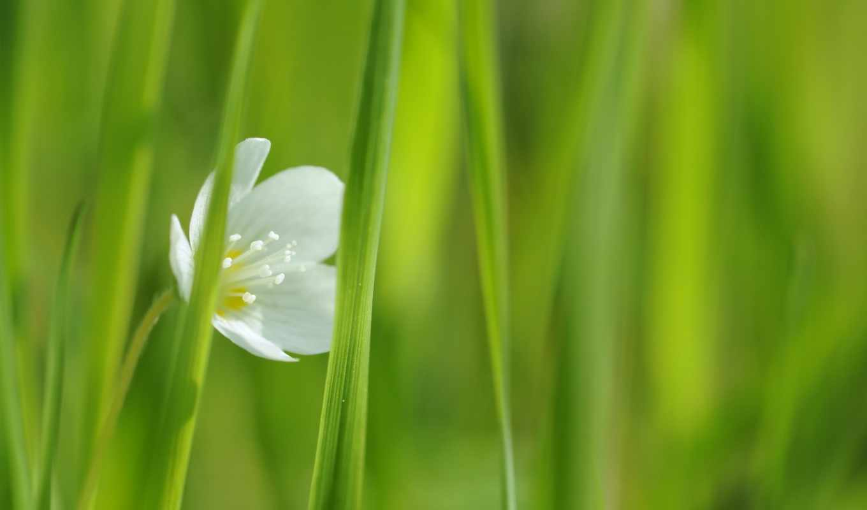 цветы, white, фотопанно, flowers, снимки, природа,