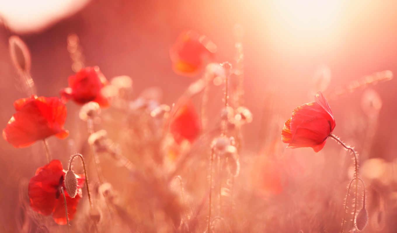 flowers, art, природа, desktop, цветы, images,