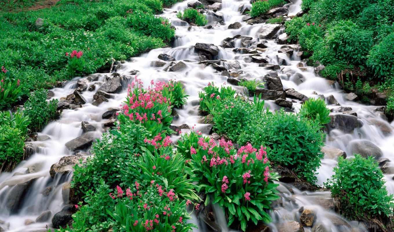 Картинка с водопадом и поляной цветов