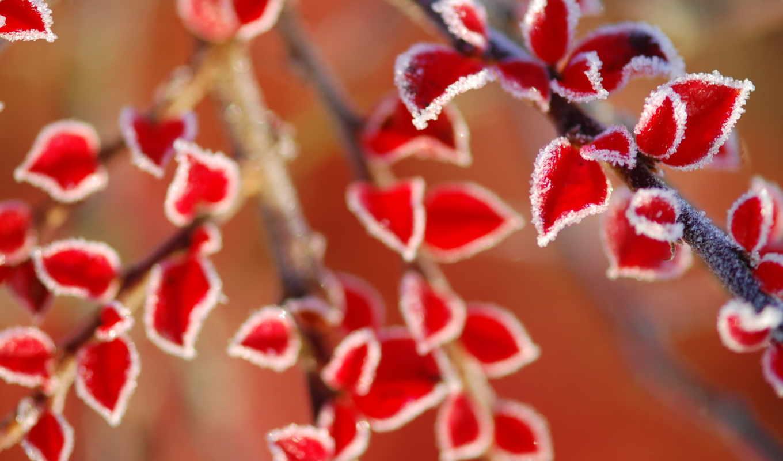 иней, листья, природа, winter, desktop,