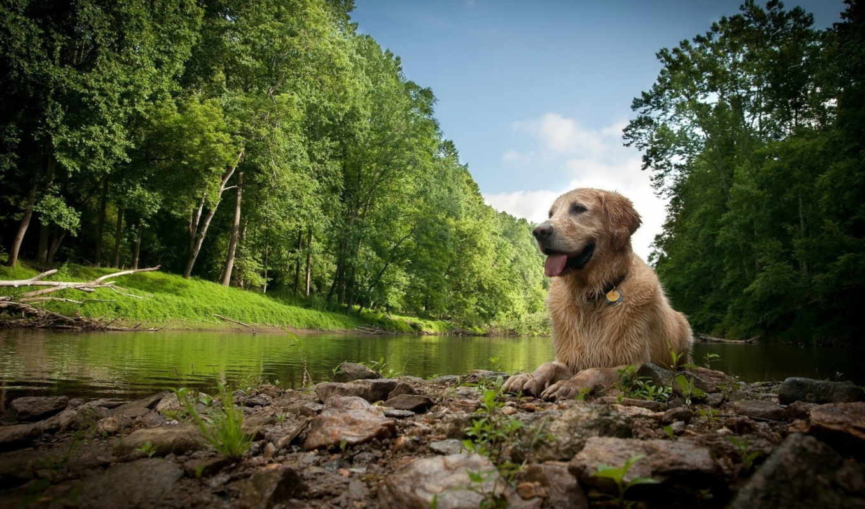 собака, природа, лежит, природе, собаки,