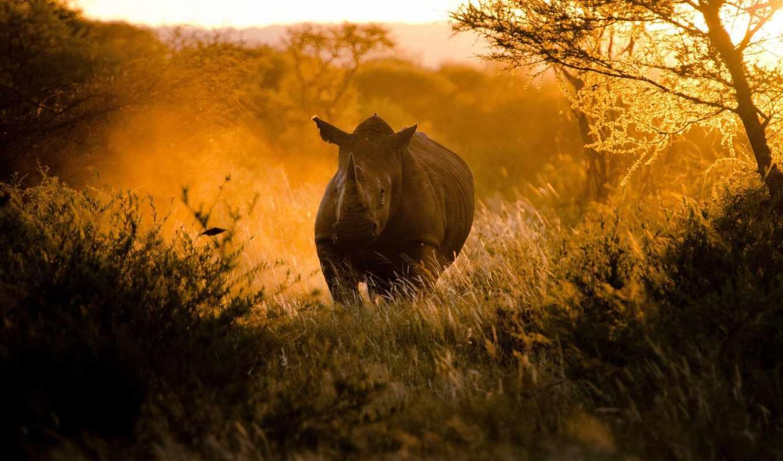носорог, zhivotnye, африка, afrika, animals, фоны,