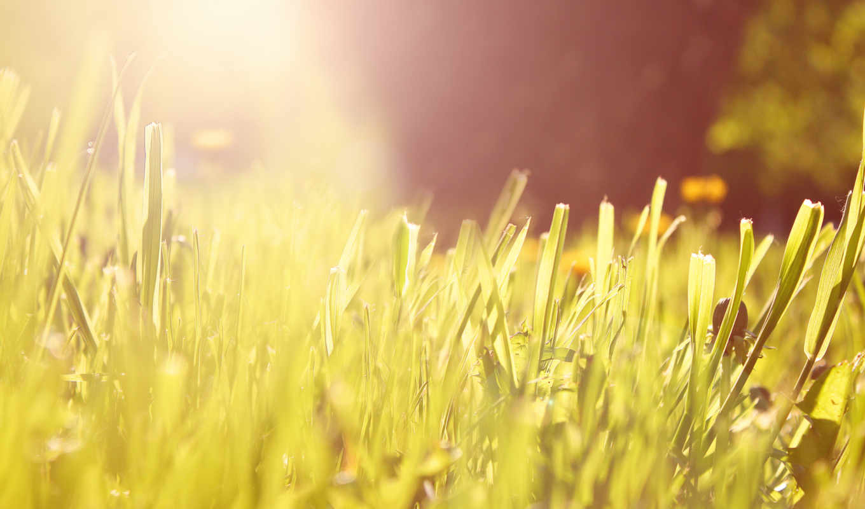 трава, свет, утро, sun, макро,