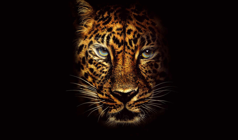 jumanji, джуманджи, колл, джунглей, пожаловать, фильма, jungle, постеры, плакат,