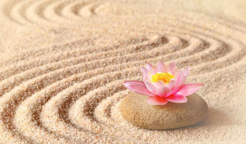 lotus, cvety, песок, камень, камни, коллекции, песке,