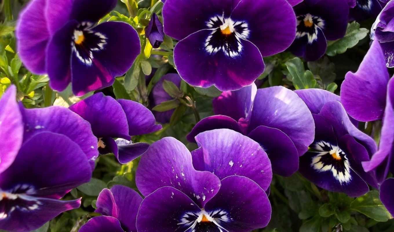 cvety, красивые, широкоформатные, весь,