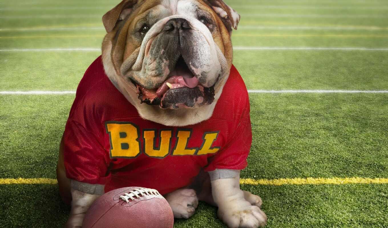animal, мяч, регби, стадион, собака, футбол, добавить, назад