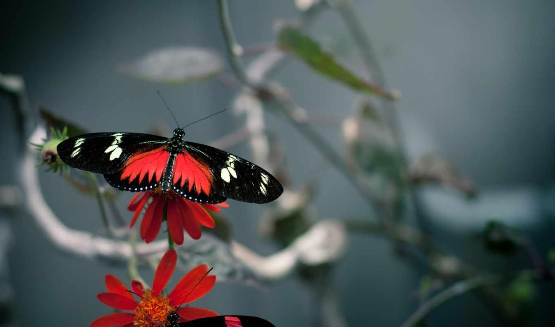 бабочки, цветы, качестве, высоком, базе, нов,