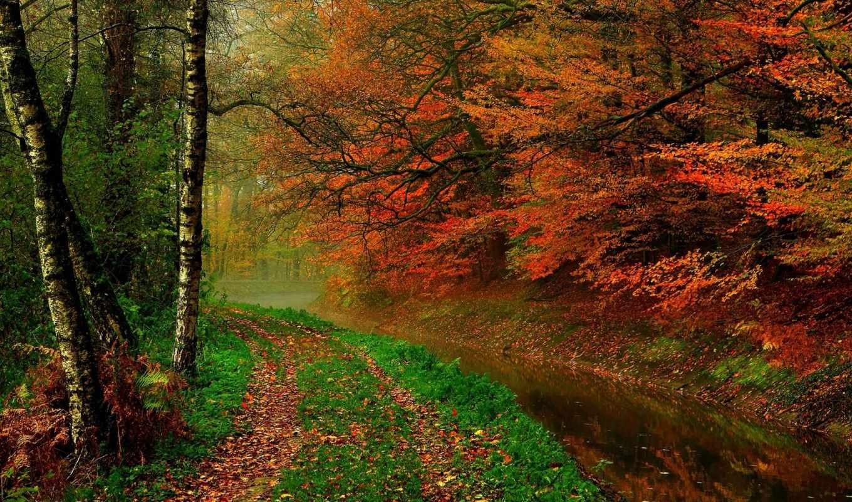 осень, trees, река, листья, hdr, лес, природа, прогулка,
