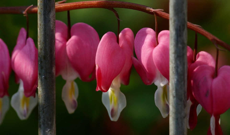подборка, красивых, девушек, branch, цветы, комнатные, сердечки,