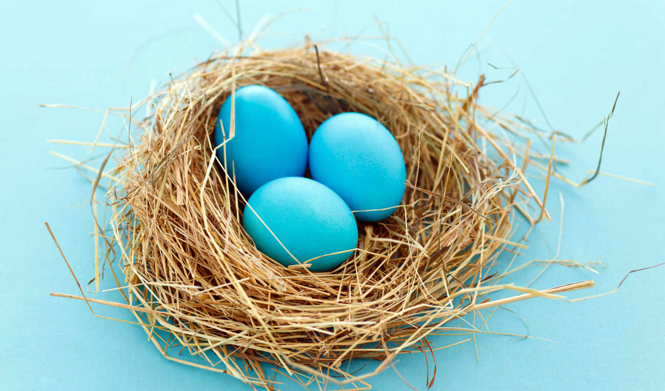 eggs, blue, easter, nest, mavi, download, yumurta, fondos, desktop, hintergrundbilder, free, pantalla, background, best,